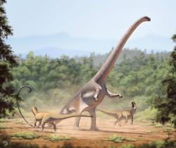 Osamělý barosaurus, bojující s dvojicí útočících teropodů (alosaurů). Rekonstrukce je založena na běžně velkých jedincích, dosahujících délky asi 26 – 28 metrů. Obří krční obratle z Utahu ale ukazují, že odrostlé exempláře barosaurů mohly být zřejmě ještě mnohem větší. Kredit: Fred Wierum, Wikipedie (CC BY-SA 4.0)