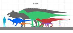 Iguanodoni byli velcí ptakopánví dinosauři, jak ukazuje i toto velikostní porovnání s dalšími ornitopody a dospělým člověkem. Nedosahovali sice rozměrů největších kachnozobých dinosaurů, i tak ale byli s délkou kolem 10 metrů a hmotností několika tun jedněmi z největších živočichů ve svých ekosystémech. Kredit: Slate Weasel; Wikipedie (volné dílo)