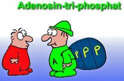 Ne všechny buňky v našem těle jedou na plný plyn. V průměru se ale dá říci že od svých mitochondrií vyžadují, aby jim  každou sekundu dodaly pro zajištění běžných potřeb, okolo deseti milionů molekul ATP. Lépe se to pamatuje, když si údaj převedeme na potřebu celého těla. Pokud zrovna nejsme v rozvodovém řízení, nebo nedoručujeme zprávu z Marathonu do Athén, tak každou minutu se nám rozloží (a mitochondrie zrecyklují) okolo jednoho gramu ATP.
