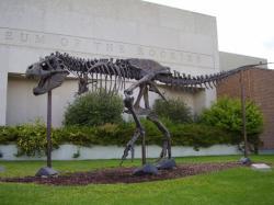 """Replika kostry menšího jedince tyranosaura, známá jako """"Big Mike"""". Od roku 2001 je umístěna před vchodem do budovy univerzitního muzea Museum of the Rockies v Bozemanu (Montana, USA). Vlastní snímek autora, červenec 2009."""