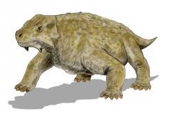 Bradysaurus se klimaticky nestabilnímu prostředí čelit zavrtáváním se do písku nenaučil a tak vyhynul. (Kredit: Nobu Tamura, Wikipedia)