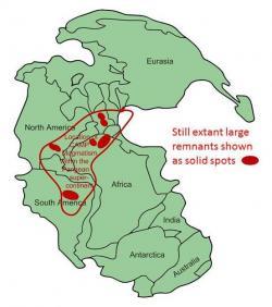Rozsah magmatické provincie CAMP na mapě superkontinentu Pangey. S rozlohou asi 11 milionů km2 jde o jednu z největších struktur tohoto druhu na světě. K jejímu vzniku došlo právě na konci triasu, a to ve čtyřech velkých pulzech vulkanické aktivity, trvajících asi 600 000 let. Dnes se její pozůstatky nacházejí na ploše čtyřech kontinentů. Kredit: Williamborg, Wikipedie (CC BY-SA 3.0)