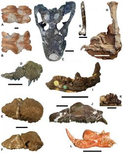 """Výběr fosilií objevených na lokalitách """"ostrova Hateg"""". Jak se v posledních letech ukazuje, nešlo rozhodně o uniformní a homogenní faunu. Ve skutečnosti se zde v posledních milionech let křídy vystřídalo hned několik různých faun. Kredit: Zoltan Csiki-Sava, Eric Buffetaut, Attila Ősi, Xabier Pereda-Suberbiola, Stephen L. Brusatte, Zookeys. Wikipedie, CC BY-SA 4.0."""