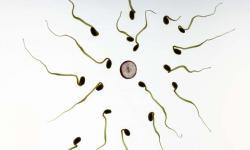 """Lidská vajíčka mají nějaký """"šestý smysl"""", jímž sperma některým mužům upřednostňují a jiným odmítají."""