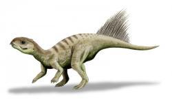 Přibližná rekonstrukce vzezření druhu Chaoyangsaurus youngi. Tito malí, vývojově velmi primitivní zástupci kladu Ceratopsia žili na území současné severovýchodní Číny v období svrchní jury, asi před 150 miliony let. S celkovou délkou těla asi 60 až 100 cm patří také k nejmenším známým ptakopánvým dinosaurům vůbec. Podle některých badatelů ale mohli být dospělci ve skutečnosti větší (dlouzí asi 1,5 až 2 metry), přičemž dochované fosilie patřily mláděti. Kredit: Nobu Tamura; Wikipedie (CC BY 3.0).