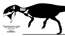 Silueta těla a znázornění dochovaných fosilních částí kostry chaoyangsaura. Dosud byly objeveny pouze fosilie přední části jeho kostry, takže přesné rozměry, tvar trupu, zadních končetin a ocasu nebo případný pokryv těla zůstávají velkou neznámou. Tento ceratops byl světu představen právě před dvaceti lety, tedy v roce 1999. Kredit: Jaime A. Headden; Wikipedie (CC BY 3.0)