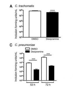 Graf ukazuje množení chlamydií v buněčné kultuře. C. trachomatis je nepatrně inhibována (černý sloupec) proti kontrole (bílý sloupec). U C. pneumoniae je už inhibice výraznější. (Kredit: DOI: 10.26508/lsa.201800292, CC BY 4.0)