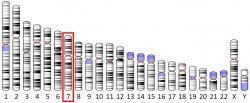 U člověka má produkci proteinu IGFBP1 pod palcem gen na sedmém chromozomu.