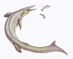 Přibližně takto mohli vypadat mosasauři, žijící na našem dnešním území v období pozdní křídy. Zřejmě šlo spíše o menší druhy, specializující se na lov ryb a měkkýšů. Na ilustraci je severoamerický druh Clidastes propython, vědecky popsaný roku 1869 E. D. Copem. Kredit: Dmitrij Bogdanov, Wikipedie