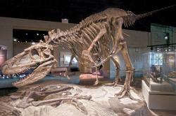 """Restaurovaná kostra daspletosaura (FMNH PR308) v expozici Field Museum v Chicagu. Tyranosaurid, objevený v souvrství Dinosaur Park na území kanadské provincie Alberta je zde však ve stínu svého mnohem slavnějšího a většího příbuzného. Tím je exemplář tyranosaura s přezdívkou """"Sue"""", pocházející z Jižní Dakoty. Kredit: ScottRobertAnselmo, Wikipedie (CC BY-SA 3.0)"""