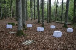 Sledování rozkladu dřeva v národním parku Bavorský les. Kredit: Sebastian Seibold / TUM