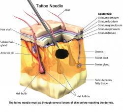 Barvivo je při tetování potřeba dopravit až do škáry. (Kredit: Scienceabc.com)