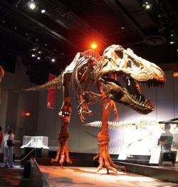 """Tyrannosaurus rex byl jedním z nejlepších """"strojů"""" na zabíjení, jaké kdy příroda na souši stvořila. Nová studie přinášející odhady síly čelistního stisku tuto skutečnost nepochybně podporuje. Tlak na korunkách zubů činil až přes 30 tun, což odpovídá hmotnosti přibližně dvou kloubových městských autobusů. Zde kostra vystavená v kanadském Royal Tyrrell Museum of Palaeontology (nedaleko města Drumheller, provincie Alberta). Kredit: D. Kereluk, Wikipedie (CC BY 2.0)"""