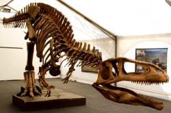 Zrekonstruovaná kostra druhu Tyrannotitan chubutensis, obřího karcharodontosaurida ze spodní křídy Patagonie. Kredit: Tecnópolis Argentina, Wikipedie (CC BY 2.0)