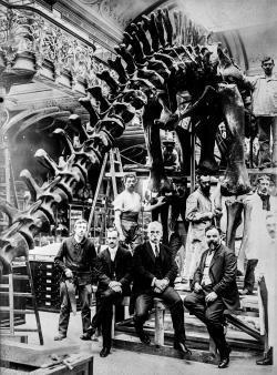 Diplodokus byl před 1. světovou válkou i ve Francii dobře známým dinosaurem, a to zejména díky replice kostry, kterou Pařížskému přírodovědnému muzeu věnoval americký ocelářský magnát Andrew Carnegie v roce 1908. Zde slavnostní odhalení zmíněné kostry v expozici muzea. Kredit: Library of Congress; Wikipedie (volné dílo).