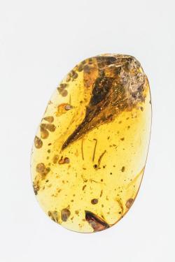 """Fantasticky zachovaná hlava miniaturního teropoda druhu Oculudentavis khaungraae. Tento jen několik gramů vážící """"prapták"""" s hlavičkou dlouhou 14 mm je v současnosti s předstihem nejmenším známým pravěkým teropodem. Je dokonce možné, že v kategorii malých rozměrů směle konkuroval současnému rekordmanovi, kolibříku kalyptě nejmenší, s tělíčkem dlouhým kolem 6 cm a hmotností zhruba 2 gramy. Kredit: Li-ta Sing (Xing Lida) et al.; Nature; web Phys.org"""