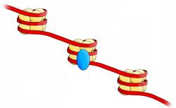 Buňky nemizí beze stopy, zanechávají po sobě DNA vlákno s nukleozomy.