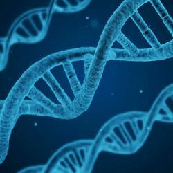 DNA. Kredit: CC0 Creative Commons.