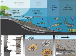 Pobřeží oceánu svrchního karbonu, jak se zachovalo vMazon Creek. Tullimonstrum uprostřed. Kredit: Geological Society.