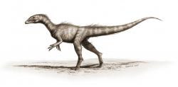 Vývojově primitivní zástupce skupiny Coelophysoidea Dracoraptor hanigani byl objeven na území britského Walesu a formálně popsán v roce 2016. Se stářím 201,3 (± 0,2) milionu let je patrně nejstarším dosud známým jurským dinosaurem, žijícím řádově jen desítky až stovky tisíc let po vymírání na přelomu triasu a jury. Kredit: Bob Nicholls; Wikipedia (CC BY 2.5)