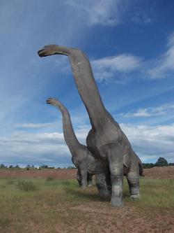 Další povedené modely z JuraParku Krasiejów, tentokrátpozdně jurského sauropoda brachiosaura. Modely představují asi 3/4 skutečné velikosti těchto dinosaurů, přesto jsou z blízkého pohledu impozantní. Kredit: Autor článku.
