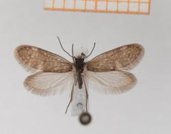 Typickým znakem motýlů (a můr) jsou dva páryvzdušnicemiprotkaných křídel, která jsou pokryta drobnými šupinkami (squamulae). Šupinky pokrývají hustě rub i líc křídel a překrývají se jako tašky na střeše.Kredit: Hossein Rajaei