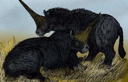 Pár sibiřských jednorožců (E. sibiricum). Kredit: Stanton F. Fink / Wikipedia / CC BY 2.5