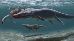 Rekonstrukce raně křídového moře na Novojičínsku. V popředí velký plesiosuchin požírající mršinu mladého dlouhokrkého plesiosaura. Vzadu proplouvá příbuzný torvoneustů. Autorkou rekonstrukce je Edyta Felcyn. Práva k rekonstrukci vlastní Daniel Madzia (k využít rekonstrukce je nezbytný písemný souhlas).