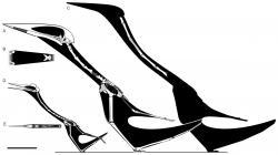Diagram se siluetami tří obřích azdarchidních ptakoještěrů, rodu Quetzalcoatlus (D-E), Arambourgiania (C) a Hatzegopteryx (A-B). Na první pohled patrné je relativní zkrácení cervikální části páteře u rumunského rodu. Oproti svým příbuzným byl Hatzegopteryx robustnější a mohutněji stavěný, což zřejmě souviselo s jeho odlišnou ekologií. Mohlo jít skutečně o obávaného terestrického predátora? Kredit: Mark Witton, studie v periodiku PeerJ, Wikipedie (CC BY-SA 4.0)
