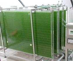"""Fotobioreaktor s řasami """"krmený"""" oxidem uhličitým a světlem. (Kredit: IGV Biotech, CC BY-SA)"""