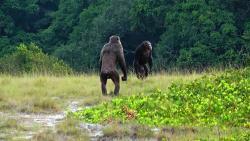 Šimpanzí lovci vLoangu. Kredit: LCP, Lara M. Southern.
