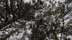 Bez informací o úhynu a přesných souřadnic zvysílačky by ornitologové na otravu luňáka nepřišli. Dušan Rak, ČSO