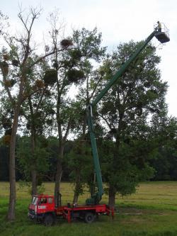 Ornitologové se khnízdu smladými orly královskými dostali pomocí plošiny. Foto: Zuzana Karlíková, ČSO