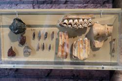 (1-11) Pazourkové nástroje. (12-13) Kosti jelena. (14) Kosti orebice horské). (15) Kosti zubra. (16) Kosti divokého osla. Paleolit, 28 až 15 tisíc let před n. l., z jeskyně Franchthi. Archeologické muzeum v Naupliu (Nafplionu). Kredit: Zde, Wikimedia Commons. Licence CC 4.0.