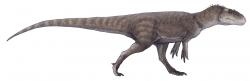 Gasosaurus constructus byl menší teropod žijící v období střední jury a jeho fosilie byly objeveny na území provincie S'-čchuan v roce 1985. Dosahoval délky jen kolem 4 metrů a hmotnosti asi 150 až 400 kilogramů. Představoval jednoho z téměř tří stovek dnes známých čínských neptačích dinosaurů. Kredit: Paleocolour; Wikipedie (CC BY-SA 4.0)