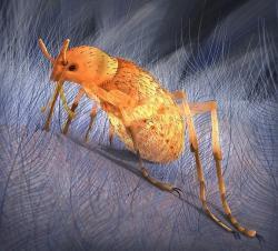 Pseudopulex jurassicus, zřejmě obří jurská blecha, sající krev opeřeným dinosaurům a dalším teplokrevným obratlovcům. Mezi její hostitele mohly patřit rody Pedopenna daohugouensis a Epidexipteryx hui. Mladší, raně křídový druhP. magnus mohl zase hodovat například na menších teropodech roduSinosauropteryx a Microraptor. Kredit: Wang Cheng / Oregon State University