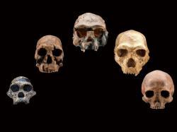 Vnašem genomu se skrývají přízrační předci. Kredit: Smithsonian's Human Origins Program.
