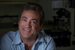 """Charles Limoli, profesor radiační onkologie na University of California:  """"Podáním lidských nervových kmenových buněk se nám daří kognitivní funkce narušené chemoterapií, obnovit."""