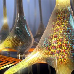 VIBM vyvíjejí neuromorfní čipy. Kredit: IBM Research.