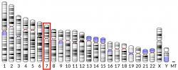 Syntézu proteinu ELMO1 řídí gen stejného jména se sídlem na 7. chromozomu. Nemocné s artritidou jeho utlumení bude léčit.