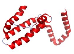 Interleukin 10 – protizánětlivý protein bránící tvorbě nových vlásečnic, růst jaterního rakovinového nádoru zpomaluje. (Kredit Ramin Herati, volné dílo)