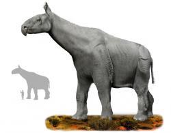 Rekonstrukce přibližné podoby obřího nosorožcovitého lichokopytníka druhu Paraceratherium transouralicum. Pravděpodobně se jedná o vůbec největšího známého suchozemského savce všech dob. Kredit: Tim Bertelink, Wikipedie (CC BY-SA 4.0)