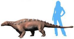 Jedním z posledních přírůstků do dinosauří statistiky je i letos popsaný čínský nodosaurid druhu Jinyunpelta sinensis. Tento obrněný dinosaurus tak představuje další položku do stále se rozšiřujícího seznamu téměř tří stovek čínských dinosauřích druhů. Kredit: Nobu Tamura, Wikipedie (CC BY-SA 4.0)