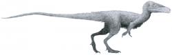 """Juravenator starki byl menší teropod, žijící v období pozdní jury (před 150 miliony let) na území dnešního Bavorska. Patřil tak k současníkům slavného """"praptáka"""" archeopteryxe. Exemplář objevený roku 1998 byl při délce 75 cm pouze menším mládětem. Fosilie, popsaná formálně v roce 2006, paleontologům ukázala, že někteří teropodi mohli být na části těla opeření a na jiných částech mohli mít """"normální"""" pokryv v podobě štítků a šupinek. Kredit: Tom Parker, Wikimedia Commons (CC BY-SA 4.0)"""