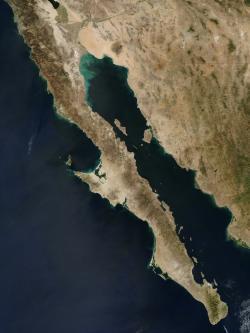 """Kalifornský záliv, alias Cortézovo moře, z větší části obklopuje poušt Sonor a tamní ostrovy jsou unikátní svou ohromnou biologickou diverzitou. Proto je v UNESCO v roce 2005 zařadilo na seznam světového dědictví jako """"Ostrovy a chráněná území Kalifornského zálivu""""."""