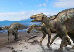 Mezi novými dinosauřími druhy, kterým se vloni dostalo značné pozornosti, patří i japonský hadrosaurid druhu Kamuysaurus japonicus. Tento velký ornitopod z tribu Edmontosaurini dosahoval délky kolem 8 metrů a hmotnosti až 5 tun. Žil v období pozdní svrchní křídy, asi před 72 až 70 miliony let, na území současného japonského ostrova Hokkaidó. Mezi jeho blízké příbuzné patřily například obří rody Edmontosaurus ze Severní Ameriky nebo Shantungosaurus z Číny. Kredit: Masato Hattori; Wikipedie (CC BY 4.0).