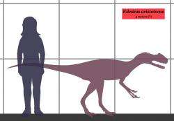 Kileskus byl poměrně malým teropodním dinosaurem, dosahujícím délky kolem 3 metrů a hmotnosti zhruba 50 kilogramů. Největší jedinci tyranosaurů tak byli oproti němu nejméně čtyřikrát delší a vážili asi stopadesátkrát více. Jen hlava dospělého tyranosaura byla asi dvanáctkrát těžší než celý tento dinosaurus. Kredit: Conty, Wikipedie (CC BY 3.0)