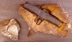 Tzv. Londýnské kladivo (či kladivo z Londonu), které patří k nejkontroverznějším artefaktům současnosti. Bylo objeveno ve 30. letech minulého století a největší pozornosti se těší od 80. let. Kredit: Glen J. Cuban, 1986 (web http://paleo.cc/paluxy/hammer.htm)