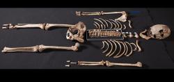 """Ještě před týdnem byl hnědookým """"bělochem"""". Kredit: Natural History Museum, London."""