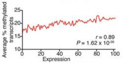 Průměrný podíl methylovaných transkriptů se zvyšuje s úrovní genové exprese. (Kredit: Dan Dominissini, University of Chicago)